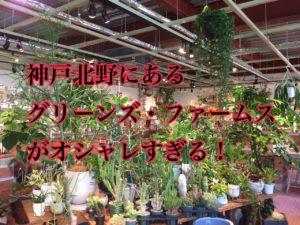 神戸北野のグリーンズ・ファームスがオシャレすぎる!【カフェも併設でデートに最適】